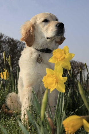 spring pup